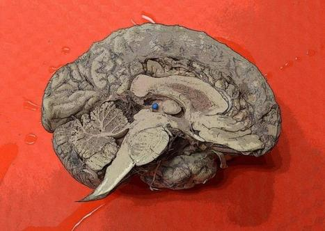 Neurobiology online course to attempt world's largest memory experiment | Continuing Education | Scoop.it