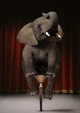 Big Data must not be an elephant riding abicycle (article)   Adaptive Learning Technology   Scoop.it