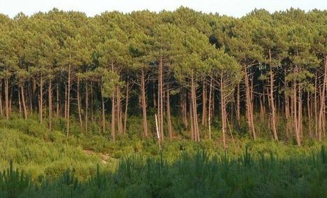 38 000 emplois et des perspectives pour la filière forêt bois en Aquitaine | Agriculture en Dordogne | Scoop.it