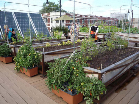 The Many Flavors of Urban Farming | Green Gnome Garden News | Scoop.it