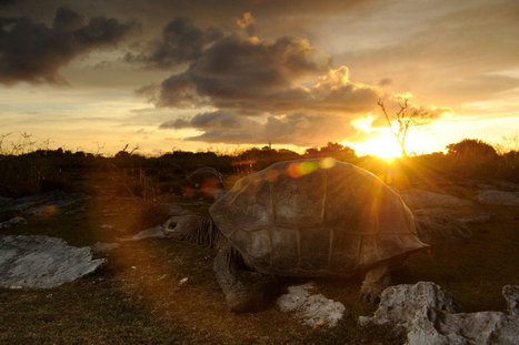 Photographing Giant Tortoises on an Island That Wants to Kill You | Nature enviroment and life. | Scoop.it