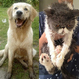 Hilarious photos show the real differences between cats and dogs | Up Country | Scoop.it