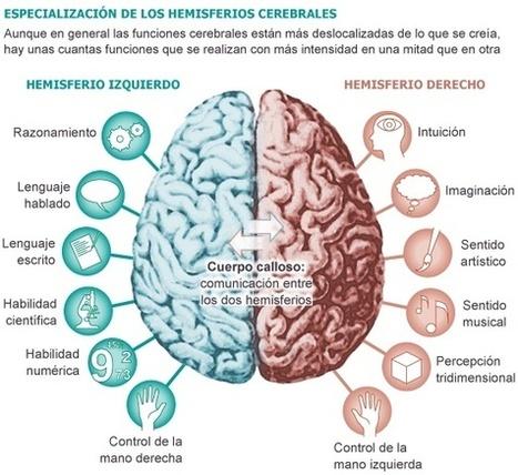 Hemisferios cerebrales | Inteligencias múltiples (Howard Gadner) | Scoop.it