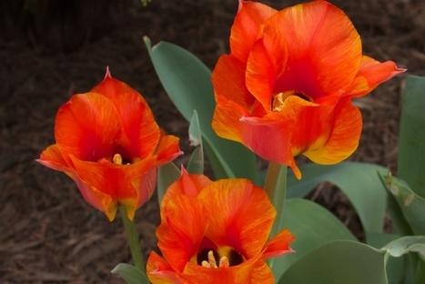 Δείτε λουλούδια να ανθίζουν σε ένα εντυπωσιακό timelapse βίντεο - Patras Events | Γεωπονικά | Scoop.it