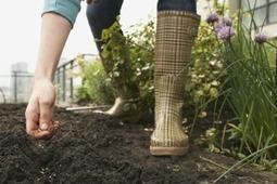 Urban Farms in Boston's Future | Living in South Boston | Vertical Farm - Food Factory | Scoop.it