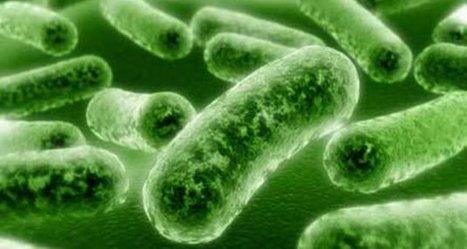 Listeria: des contaminations en baisse dans les IAA | Actualité de l'Industrie Agroalimentaire | agro-media.fr | Scoop.it