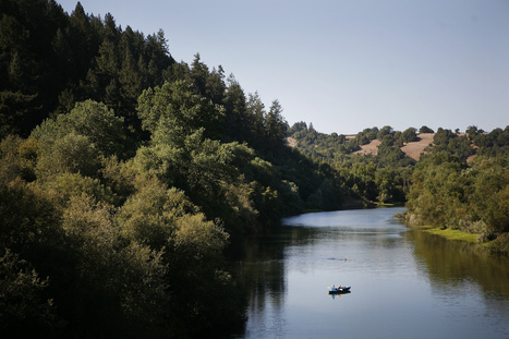 Wine vs. Salmon: Water Wars Hit Sonoma County | Food issues | Scoop.it