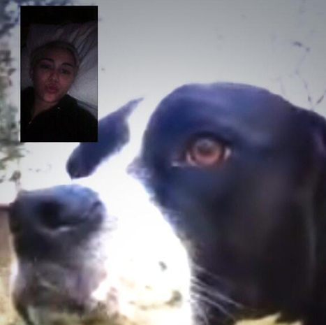 Miley Cyrus FaceTimed With Her Dog, Who Can Apparently Use An iPhone | Miley Cyrus | Scoop.it