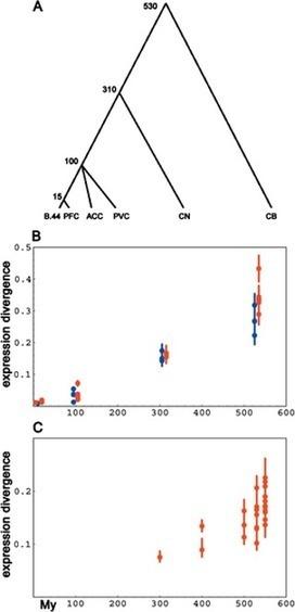 A Neutral Model of Transcriptome Evolution | Plant Genomics | Scoop.it