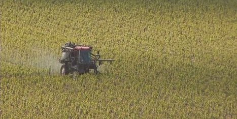 Les vignerons de Champagne bio demandent l'interdiction des herbicides   Le vin quotidien   Scoop.it