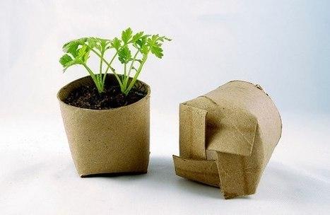 Sembrando tus semillas en contenedores bio-degradables. | y en Otras Noticias | Scoop.it