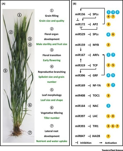 SMARTER De-Stressed Cereal Breeding | Plant Gene Seeker -PGS | Scoop.it