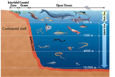 Rocky Rex's Science Stuff: The Oceans - Oceans Are Losing Oxygen | Seahorse Project | Scoop.it