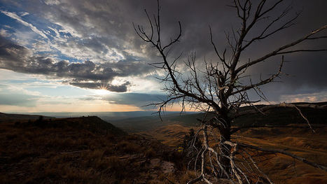 Wyoming Wildscapes | Nemesis TV | Scoop.it