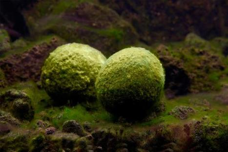 One of the World's Most Unusual Plants Is Disappearing | Biodiversity protection | Scoop.it