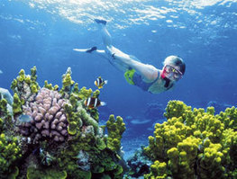 Global climate change likelier to affect dominant coral population - Zee News | Sustain Our Earth | Scoop.it