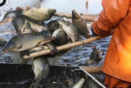 EU issues guidelines to boost aquaculture | Aquaculture | Scoop.it