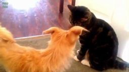 Cats Meeting Puppies for the First Time 2016   How can I do....?   Scoop.it