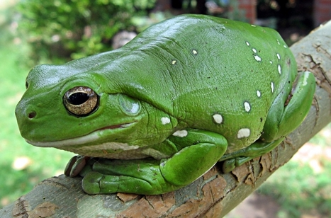 A Frog's tale | Nature | The Earth Times | AJC's Frogroom | Scoop.it