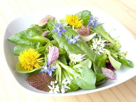 Fleurs comestibles : le goût des plantes rares ! | Gastronomie Française 2.0 | Scoop.it