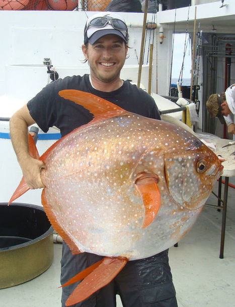 First Warm-Blooded Fish Found | Marine Conservation Research | Scoop.it