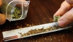 Morocco considers legalization of marijuana   Hemp Beach TV ...   Drug law reform   Scoop.it