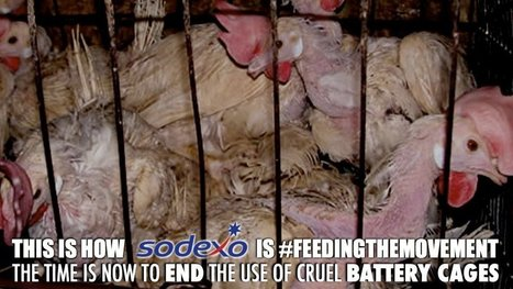 Sodexo: Stop Purchasing Eggs From Battery-Cage Farms. | News for Decision Makers - Food-services & Restaurants | Scoop.it