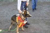 Rescue Dog Deploys Robot Snake by Barking - TIME | Robots and Robotics | Scoop.it