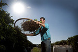 Coffee Slumps to Lowest in Two Years on Brazil 'Monster' Crop - Bloomberg | Economics - Germany and Brazil | Scoop.it