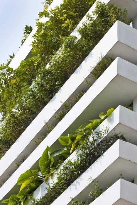 Are Green Buildings Biophilic? Why the answer matters, particularly in Asia - Construction21 | Costruzioni | Scoop.it