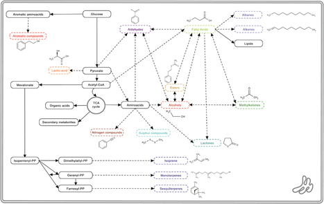 Volatile affairs in microbial interactions.   滴酒餓餓實驗室   Scoop.it