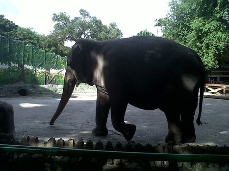 Horrible, Horrible Manila Zoo! | Places and Events - The Opinionarian | Scoop.it