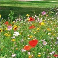 Belgique. La semaine de l'abeille à Braine-l'Alleud | Les colocs du jardin | Scoop.it