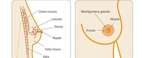 Brustvergrößerung mit inneren BH | Medizin - Gesundheit - Beauty | Scoop.it