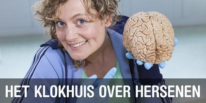 NTR   Het Klokhuis - Algemeen   Hersenwerk   Scoop.it