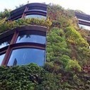 Green Walls Could Cut Air Pollution   Ecology Global Network   Maverly Lands   Scoop.it