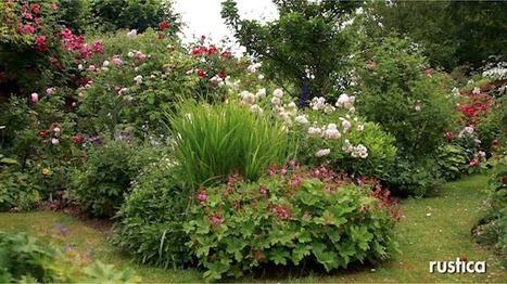 Idée de massif : mettre en valeur un rosier   Couture, cuisine jardinage   Scoop.it