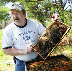 Mild winter could lead to huge honeybee die-off come fall | Food issues | Scoop.it