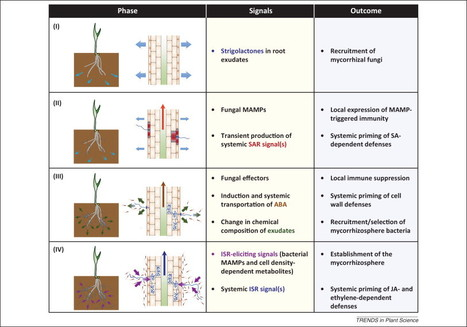 Mycorrhiza-induced resistance: more than the sum of its parts? (TIP 2013) | Symbiotic root fungi | Scoop.it