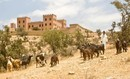Le Maroc dispose d'écosystèmes riches et variés nécessitant une ... | Ecotourisme au Maroc | Scoop.it