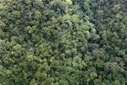 Controversial research outlines physics behind how forests may bring rain | The Glory of the Garden | Scoop.it