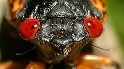 Meet the beetles – and other insects that have rhythm and lead to mating | Music, Theatre, and Dance | Scoop.it