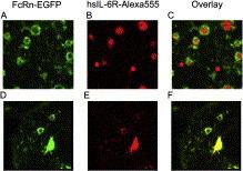pH-dependent antigen-binding antibodies as a novel therapeutic modality | Laboratorios Wachoski | Scoop.it