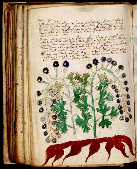 Plaidoyer pour l'herboristerie - Information - France Culture | Merveilles - Marvels | Scoop.it