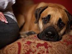 Why dogs have feelings too | Weird | News | Daily Express | dog friendly nyc | Scoop.it