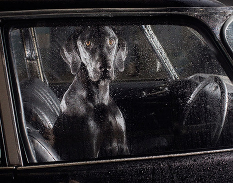 Dogs in Cars | Photographer : Martin Usborne | PHOTOGRAPHERS | Scoop.it