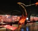 Más de 20 razones para visitar el Parque de las Ciencias durante el ... - Granada en la red   Educación   Scoop.it