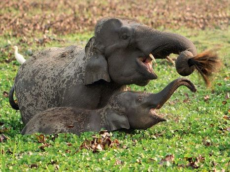 Wildlife Picture -- Elephants Photo -- National Geographic Photo of the Day | Fotografía | Scoop.it