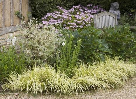 Carex et galéga, des vivaces au feuillage attrayant | jardins et développement durable | Scoop.it