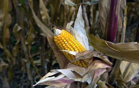 Importations d'OGM: Bruxelles propose une solution à la carte qui fâche tous le monde   Questions de développement ...   Scoop.it